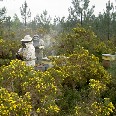 Beekeepers in Forest apiary